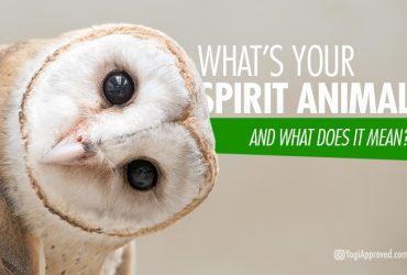 SPIRITUAL ANIMAL BOOK